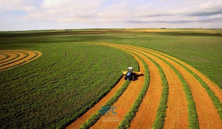 رشد ٣٢ درصدی صادرات محصولات کشاورزی 5 | آفکو