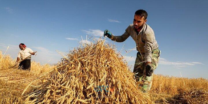 مشکل ترخیص بذرهای علوفه نتیجه نداد 5 | آفکو