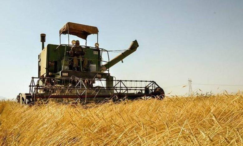 بخشنامههای خلقالساعه بلای جان صادرات محصولات کشاورزی 5 | آفکو