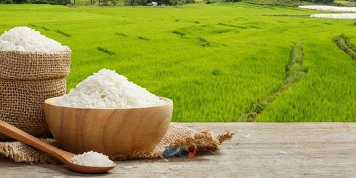برنج ایرانی یک کالای صادراتی بینظیر 5 | آفکو