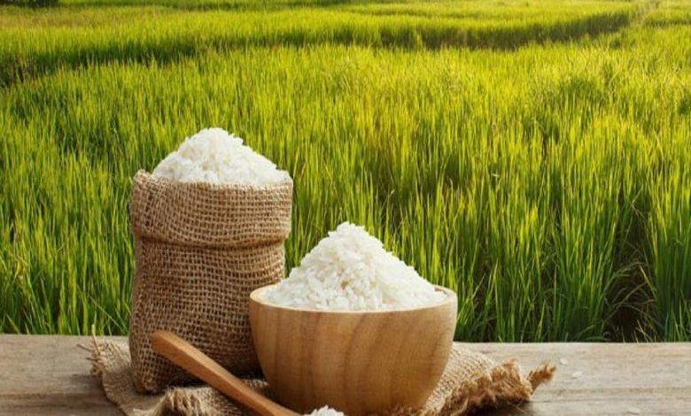 واردات و ترخیص غلات و حبوبات از گمرک 5   آفکو
