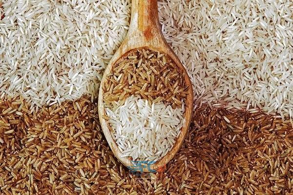 عدم رعایت استاندارد واردات برنج فاجعه است 5 | آفکو