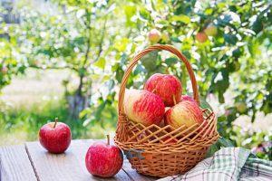 ۶۵۰ هزار تن سیب در خطر از بین رفتن 9 | آفکو