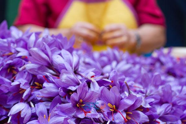 بازی جدید صادرات زعفران برای تامین ارز واردات پر سود/ خطر تشکیل اوپک زعفران! 5 | آفکو