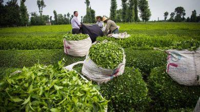 تصویر از صادرات بیش از ۲ هزار تن محصولات چاپی از استان قزوین
