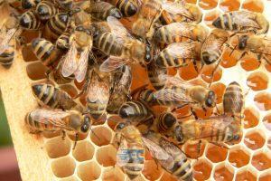 مراحل صادرات عسل 12   آفکو