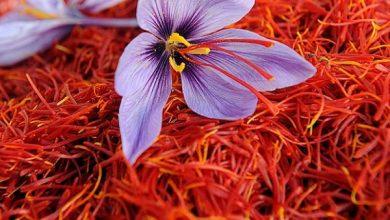 تصویر از مهم ترین نکات صادرات زعفران به ترکیه