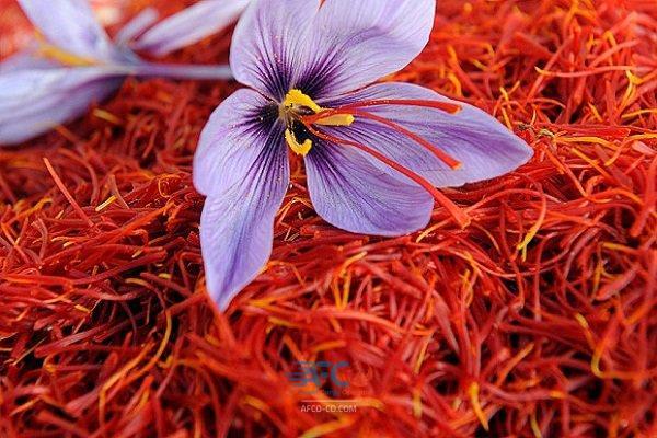 مهم ترین نکات صادرات زعفران به ترکیه 5 | آفکو