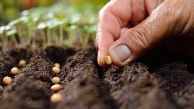 تصویر از از واردات بذر چه میدانید؟