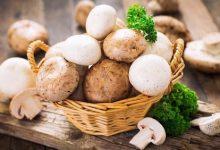 تصویر از صادرات قارچ و بازارهای صادراتی آن
