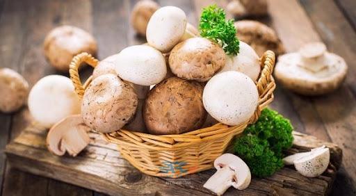 صادرات قارچ و بازارهای صادراتی آن 5   آفکو