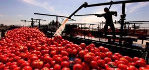 صادرات رب گوجه فرنگی 13 | آفکو
